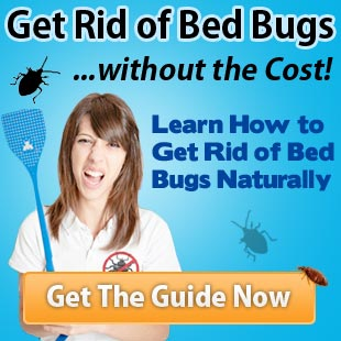 does cold kill bed bugs » bed bug control methods